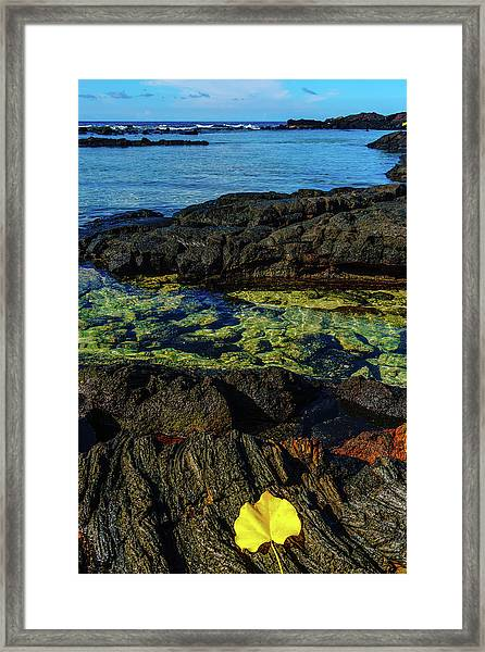 Lonely Leaf Framed Print
