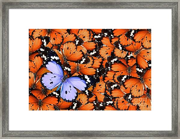 Lonely Lilac Butterfly Among Set Of Framed Print