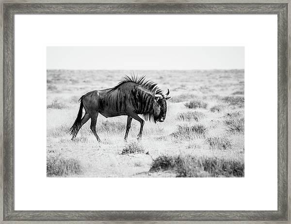 Long Walk Framed Print