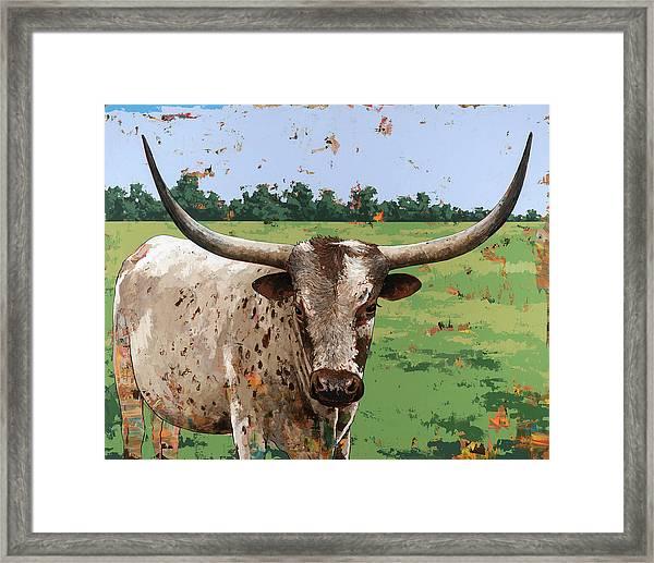 Longhorns #1 Framed Print by David Palmer