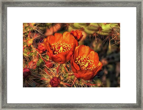 Look But Don't Touch Framed Print