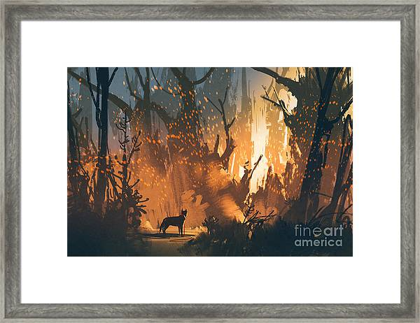 Lost Dog In The Forest With Mystic Framed Print
