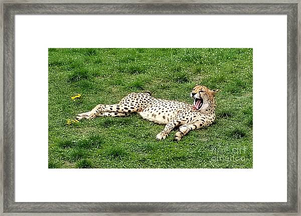 Lounging Cheetah Framed Print