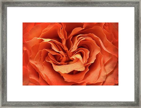 Love In Motion Framed Print