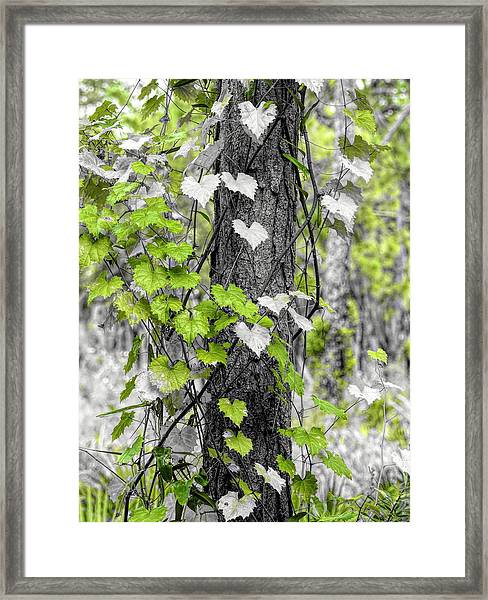 Love Of Nature Framed Print