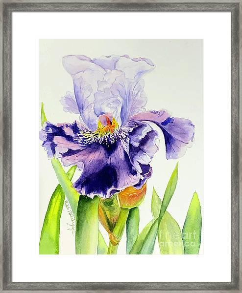 Lovely Iris Framed Print