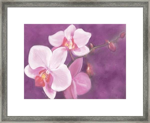 Luxurious Petals Framed Print