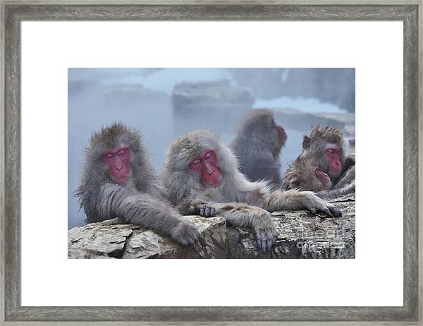 Macaques In A Hot Spring At Jigokudani Framed Print