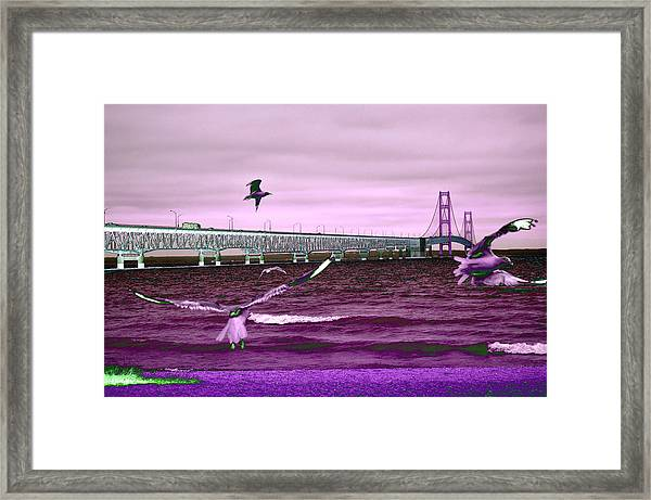 Mackinac Bridge Seagulls Framed Print