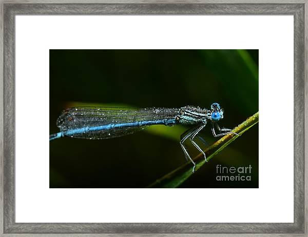 Macro Photography Dragonfly Framed Print