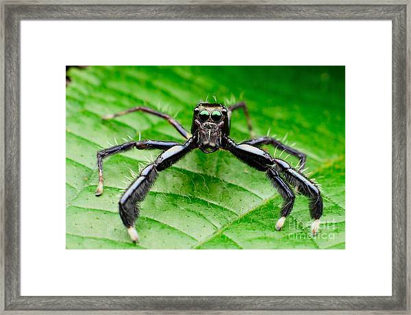 Macro Photography With Background Blurr Framed Print