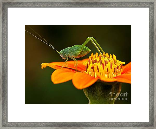 Macro Photos From Insects, Nature And Framed Print by Dudu Linhares