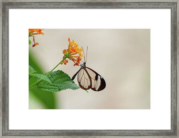 Framed Print featuring the photograph Made Of Glass by Anjo Ten Kate