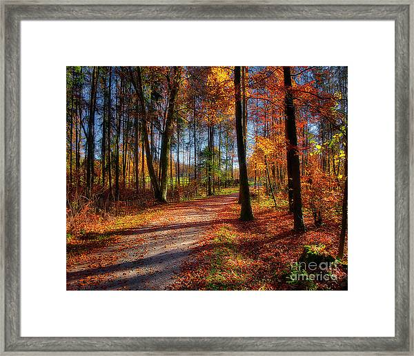 Magic Of The Forest Framed Print