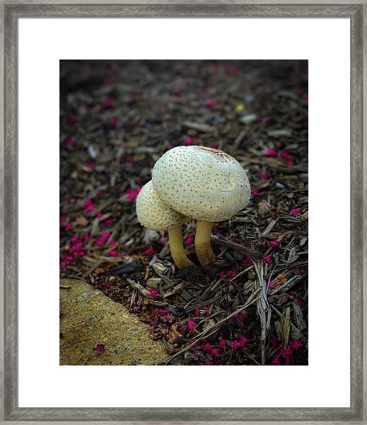 Magical Mushrooms Framed Print