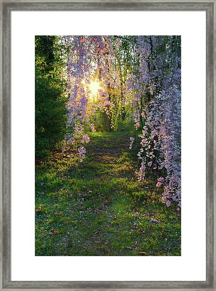 Magnolia Tree Sunset Framed Print