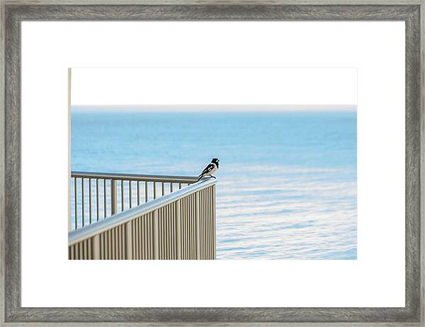 Magpie In Waiting Framed Print