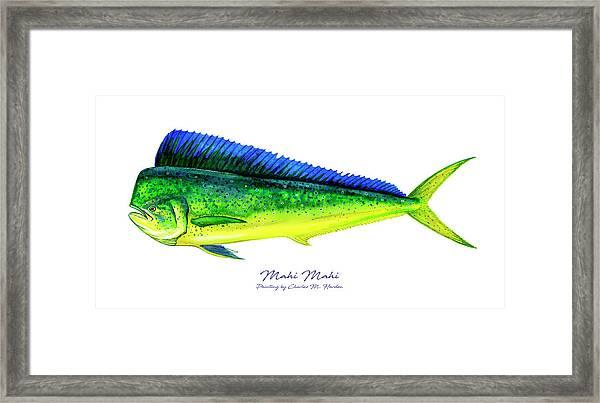 Mahi Mahi Framed Print