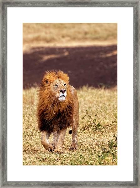 Majesty Framed Print