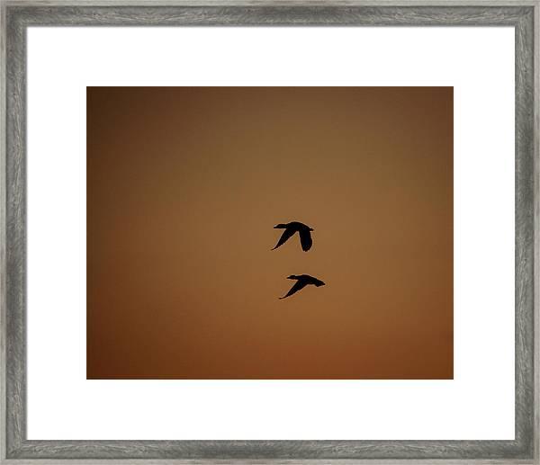 Mallard Morning Framed Print