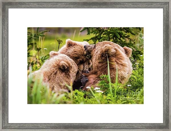 Mama Bear Nursing Her Two Cubs, Lake Clark National Park, Alaska Framed Print