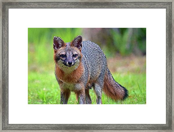 Mama Fox Framed Print
