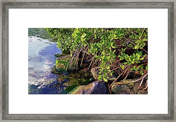Mangrove Bath Framed Print