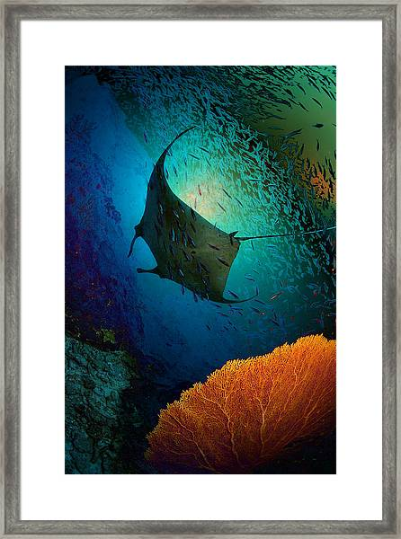 Manta Dreams Framed Print by Nature, Underwater And Art Photos. Www.narchuk.com
