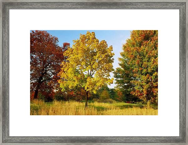 Maple Acer Trees In Autumn, Bronx, Ny Framed Print