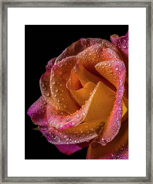 Mardi Gras Sprinkled Beauty Framed Print