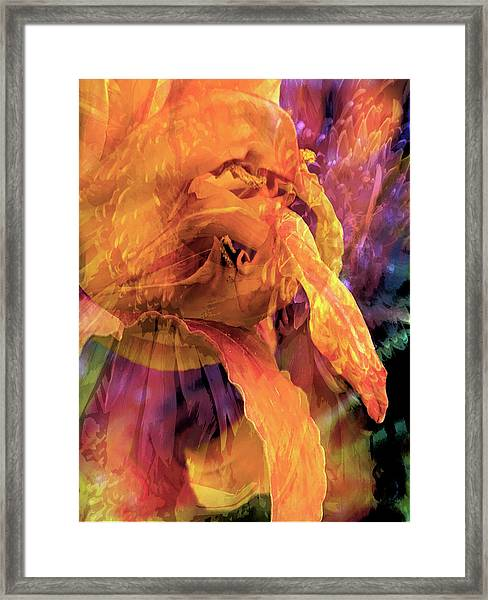 Marmalade Bloom Framed Print