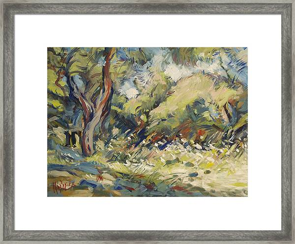 Marmari Olive Orchard Paxos Framed Print