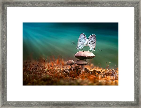 Mating Butterflies On Mushroom With Framed Print