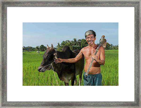 Matured Asian Farmer With Cow Framed Print