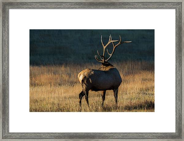 Framed Print featuring the photograph ME3 by Joshua Able's Wildlife