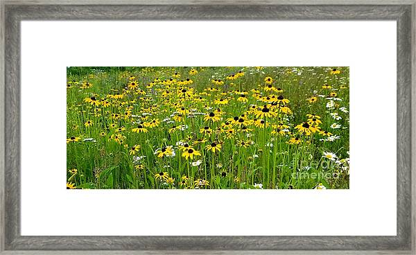 Meadow Flowers 1 Framed Print