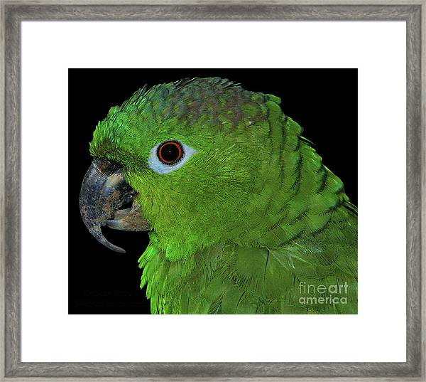 Mealy Amazon Framed Print
