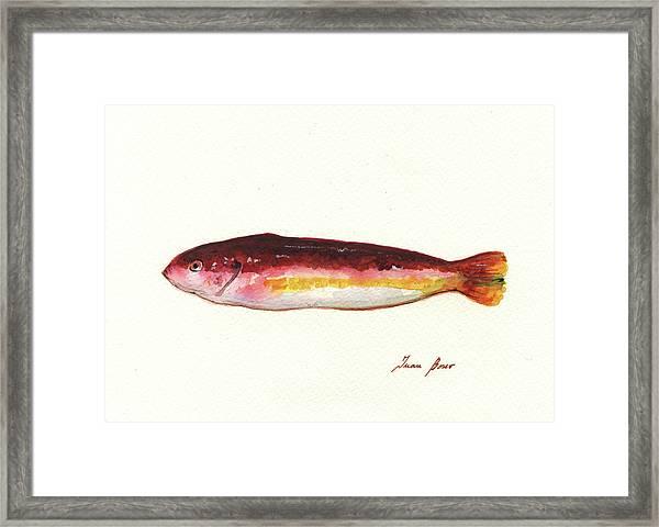 Mediterranean Rainbow Wrasse Framed Print