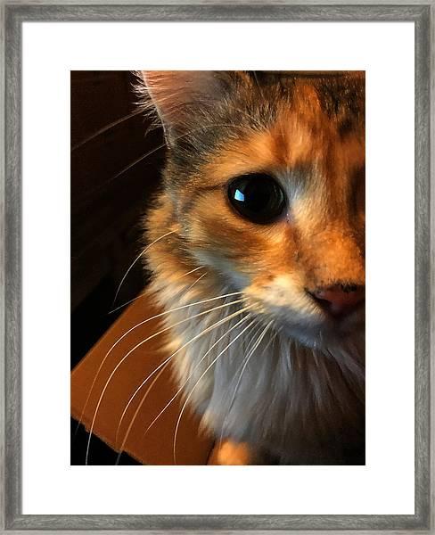 Mercy Framed Print