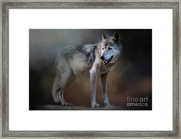 Mexican Wolf Framed Print