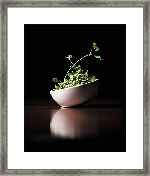 Micro Greens Framed Print