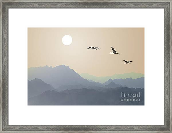 Migrating Cranes To The Sun Over The Framed Print