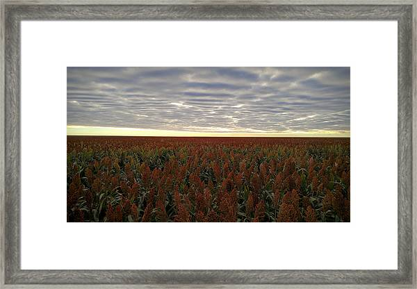 Miles Of Milo Framed Print