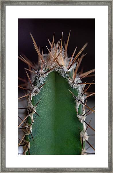Framed Print featuring the photograph Mini Cactus Up Close by Scott Lyons