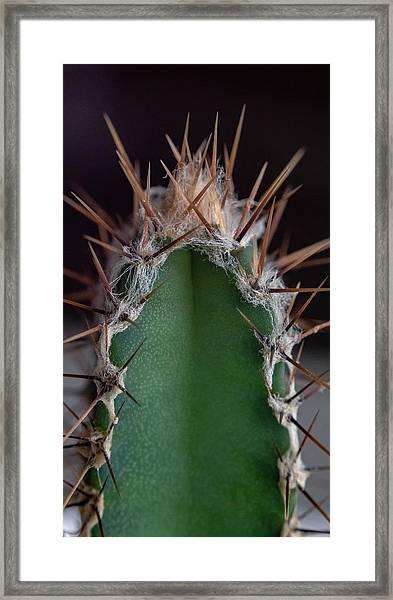 Mini Cactus Up Close Framed Print
