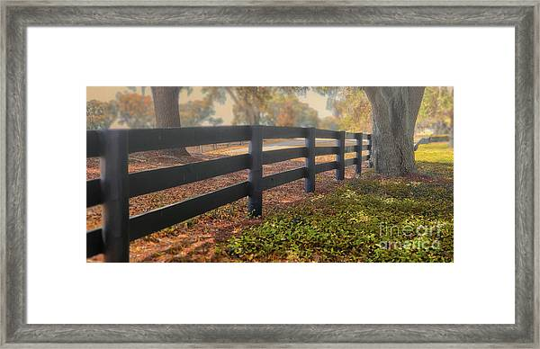 Misty Morning Walk Framed Print