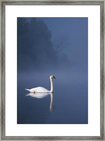 Misty River Swan 2 Framed Print