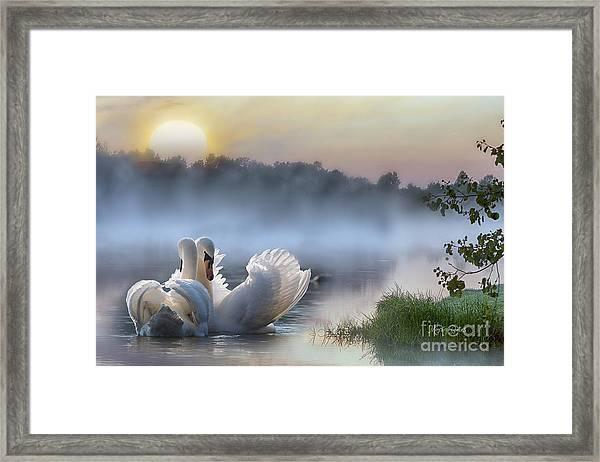 Misty Swan Lake Framed Print