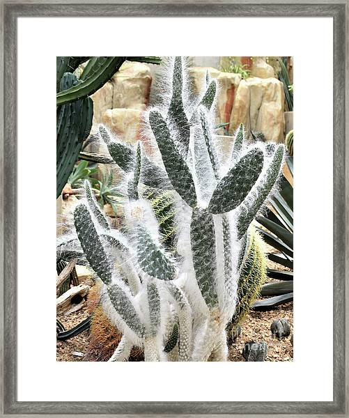 Mojave Prickly Pear Framed Print