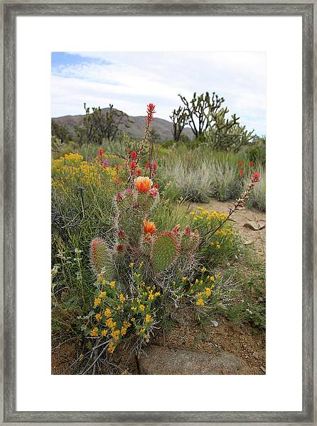 Mojave Spring Framed Print by Robin Street-Morris